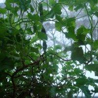 листья :: dana c