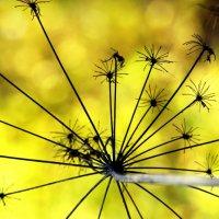Растительный фейерверк :: Джон Нэш