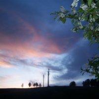 краски весны :: Настя Соколова