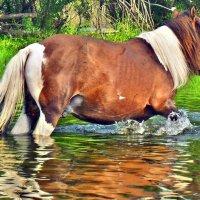 Дикие лошади :: Настя Соколова