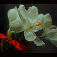 Цветочек :: Юлия C.