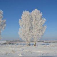 природа зима :: Юлия Кучерова