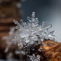 Снежинка :: Виктор Балешенко