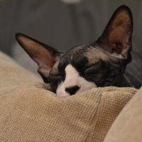 для этого кота нет большего рая на земле, чем пакет с кормом и мягкая подушечка ))) :: Olga Suvorova