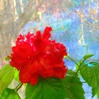 Цветок :: Иван Рудников