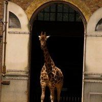 London zoo :: Никита Литвинов