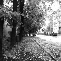 Улица :: Кирилл Воронин