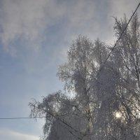синий синий иней :: Инна Алексеенко