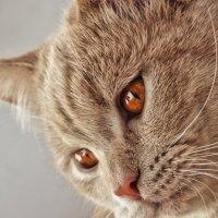 Коте :: Олег Резенов