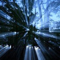 Рассвет души лесной :: Roman Kamin
