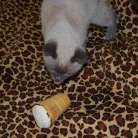 кошки :: Юлия Кучерова