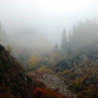 Таинственный туман :: Shaadan _