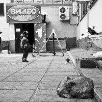 не гоняй голубей :: Руслан Махмуд-Ахунов