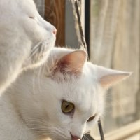 кошки :: Виктория Велес