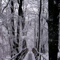 зима... :: Ольга Фил