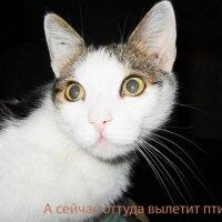 Кот Мурзик. 08.02.12. :: Елена Гриц