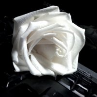 White Rose :: Кристина Кеннетт