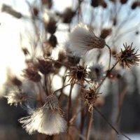 cold sun :: Дмитрий Литвинчук