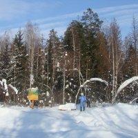 Прогулка в зимнем лесу :: Павел Бардашев