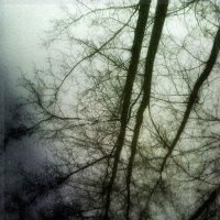 Отражение в луже после дождя :: Кристина Кеннетт