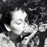 Сирень цветёт :: Михаил Балан