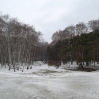 дорога через лес :: dana c
