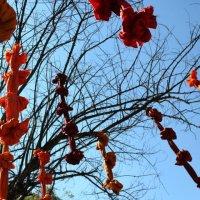 Весна :: мм савамуаа