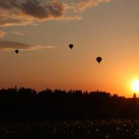Полёт воздушных шаров на закате :: Александр Копосов