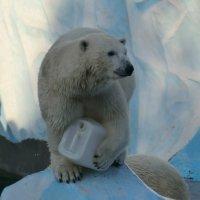 Белый медведь :: Денис Мельников