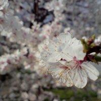 весна :: Максим Дер