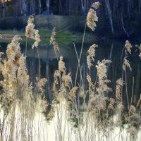 Ждут травиночки заката :: Евгений Жиляев