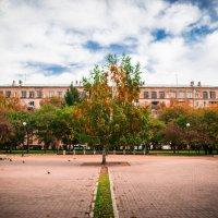 Одинокое дерево :: Владислав Никитин