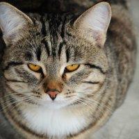 Cat :: Елена Евсюкова