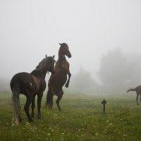 утро в деревне :: Михаил Лежнёв