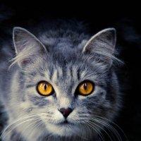 autumn eyes :: Алена Ступникова
