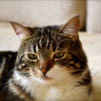 Мой любимый кот :: Евгений Шевцов