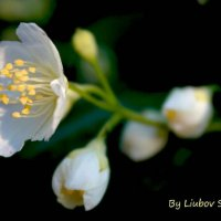 Красавица :: Любовь Шихова