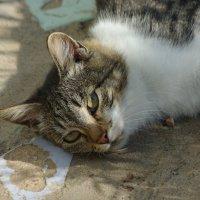 кошка :: Роман Буторин