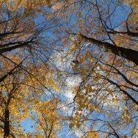 осень :: владимир ванюра
