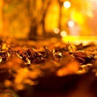 Опавшие листья :: Андрей Гаврилов
