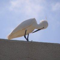 Птицы в городе :: Владимир Барковский