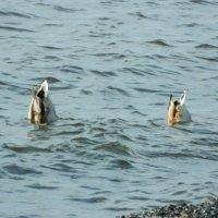 Синхронное плавание :: Lina Liber