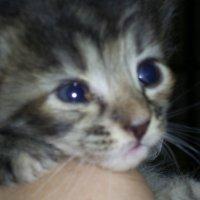 Машка...кошка :: Владимир Бориов