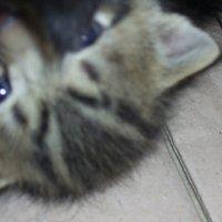 Машка ...кошка :: Владимир Бориов