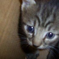 Машка..кошка :: Владимир Бориов