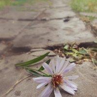 Одинокий цветок :: BeGiNnEr CaMeRiSsSt