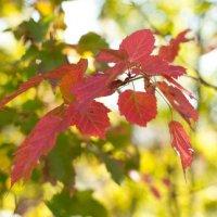 Красные листья :: Анастасия Розова