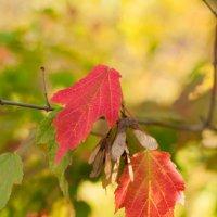 Осенние листья :: Анастасия Розова