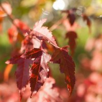 Осень :: Анастасия Розова