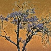 Acid Tree :: Ксения Маковецкая